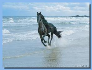 horse running along ocean shore
