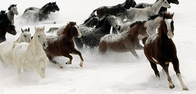 horses running in desert